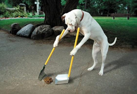 cane-che raccoglie la sua cacca